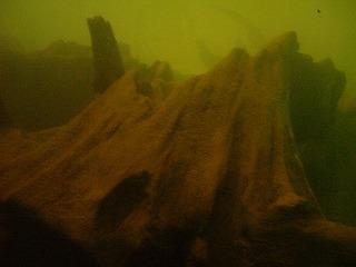 水中の埋没林