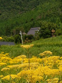 070811-18_kyoto_022.jpg