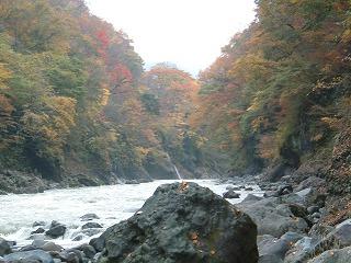 吾妻川の紅葉
