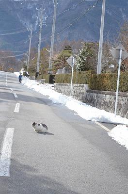 路上で昼寝する猫