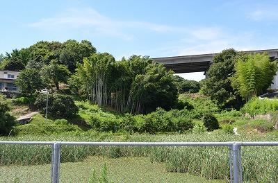 富田隕石落下地点付近の竹藪