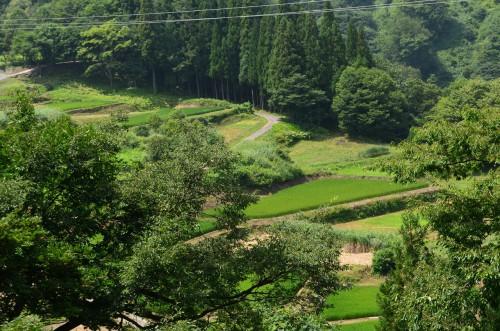 秋山郷の段々畑