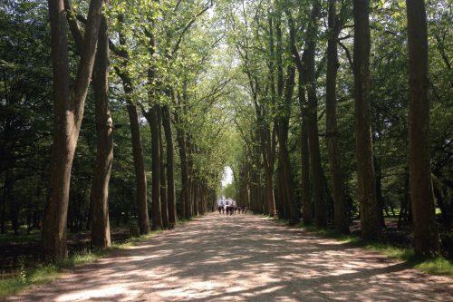シュノンソー城への道