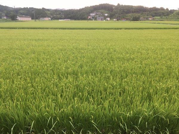 登米市登米町の田園風景