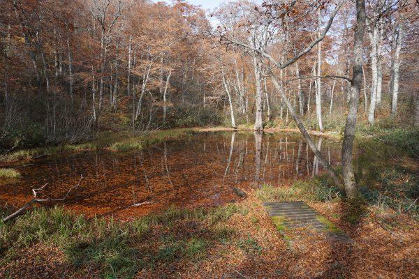 奥裾花自然園。秋の吉池